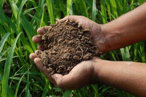 soil based probiotics