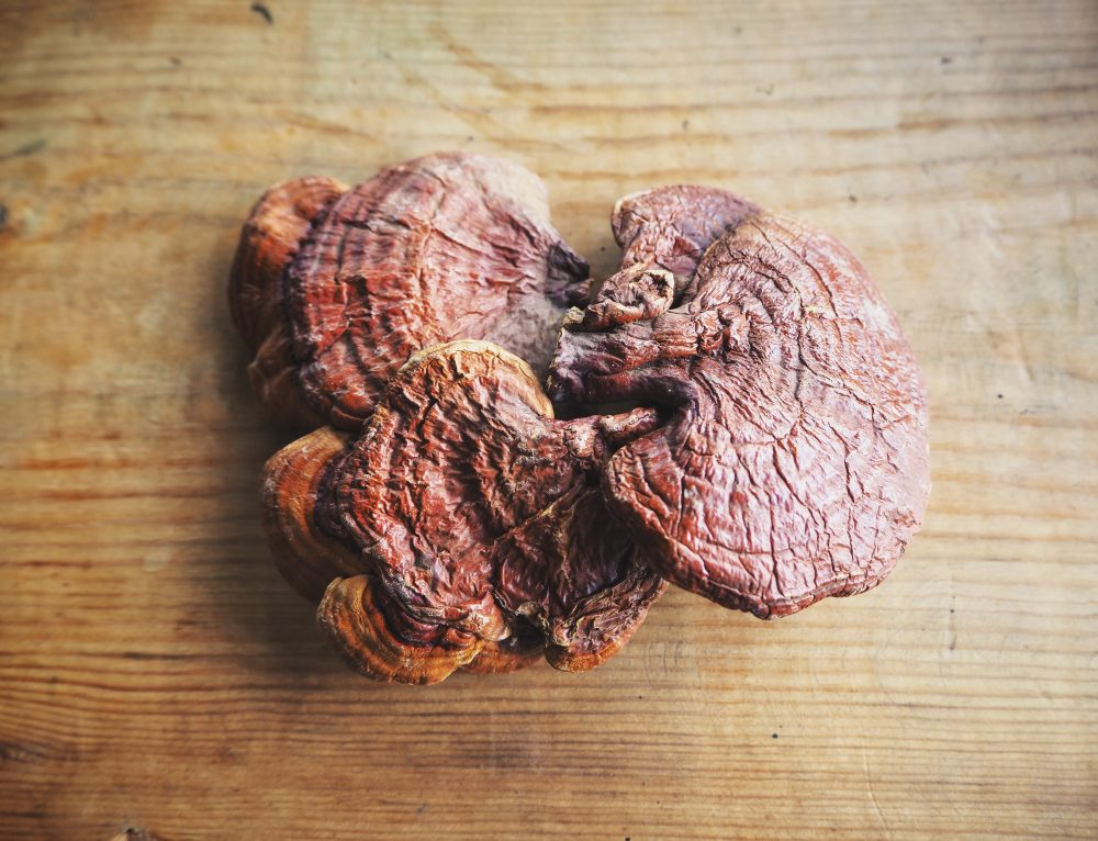 Awaken Your Immune System with Reishi – The Top-Selling Mushroom Species in the World